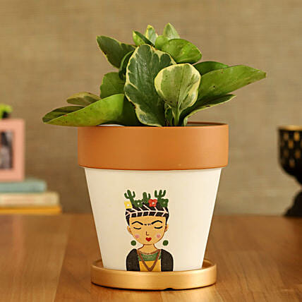 Peperomia Plant In Girl Printed Golden Plate Pot