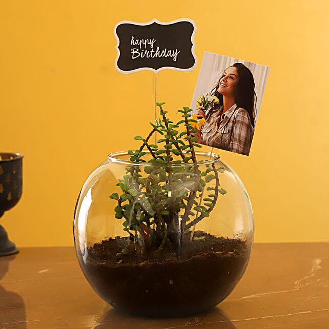 Order Personalised Birthday Jade Plant Terrarium