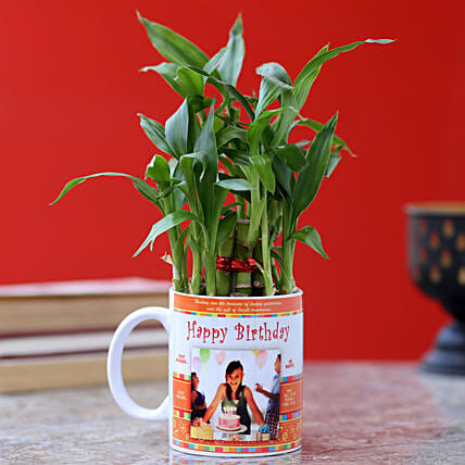 printed mug with bamboo plant for him online:Personalised Pot plants