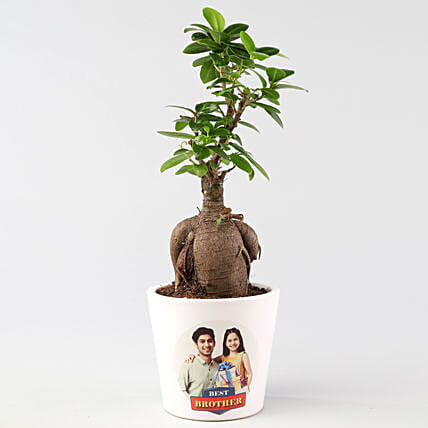 customised ficus ginseng for rakhi online:Buy Personalised Planter