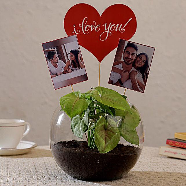 Online Personalised Plant Terrarium