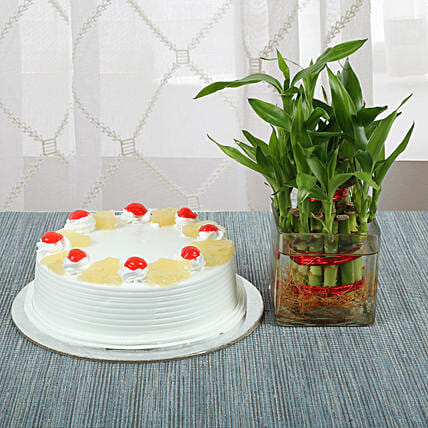 Bamboo with Pineapple Cake:Lucky Bamboo for Mothers Day