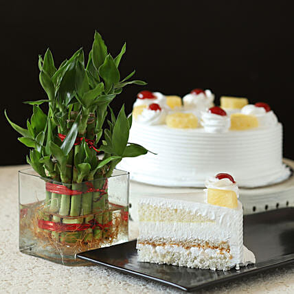 Bamboo with Pineapple Cake:Cakes N Plants