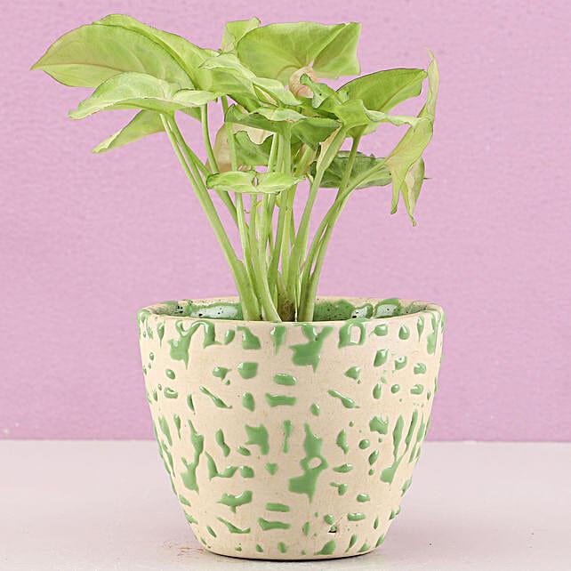 outdoor plant online