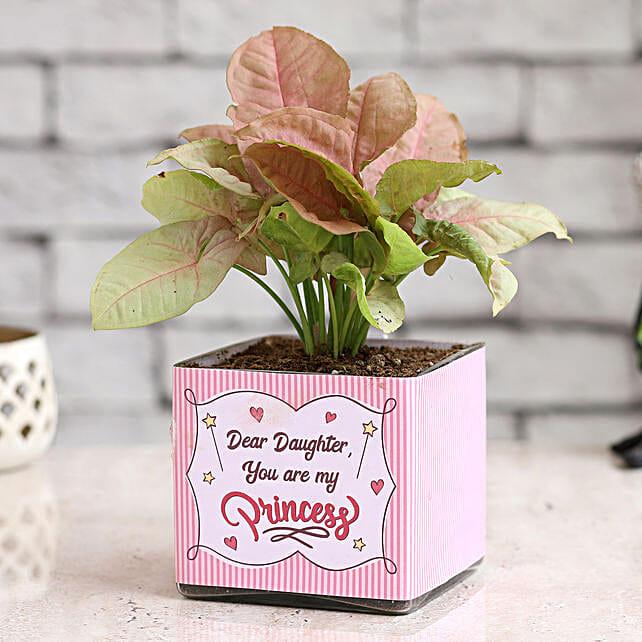 Online Pink Syngonium For Daughter