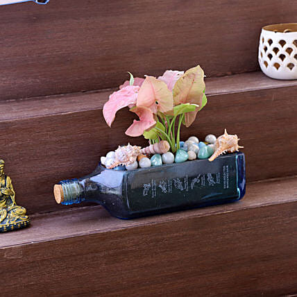 Pink Syngonium Plant In Bombay Sapphire Bottle Planter:Plants for anniversary