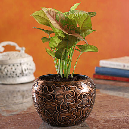 Pink Syngonium Plant In Embroidery Print Pot