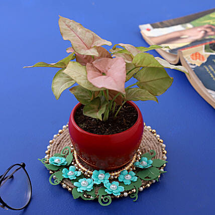 Pink Syngonium Plant In Metal Pot And Blue Floral Plate