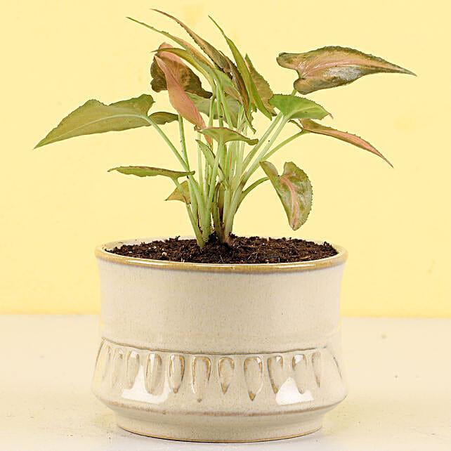 best green plant online