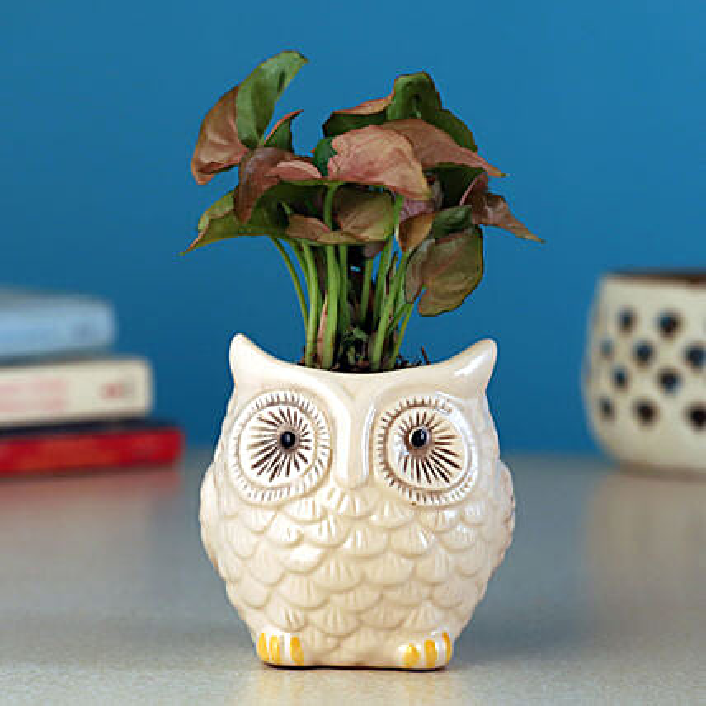 Pink Syngonium Plant In White Owl Ceramic Pot
