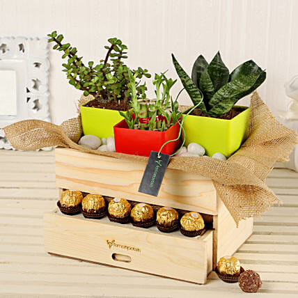 Online Plants And Rocher Choco Basket