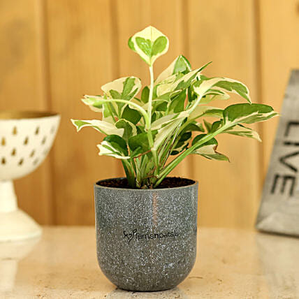 plant with planter online