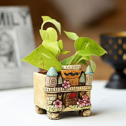 Potted Money Plant:Ceramic Planters