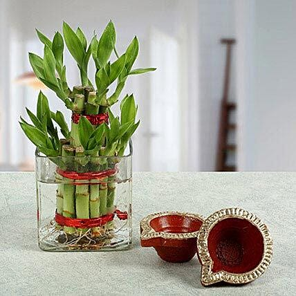 Lucky bamboo with a diya