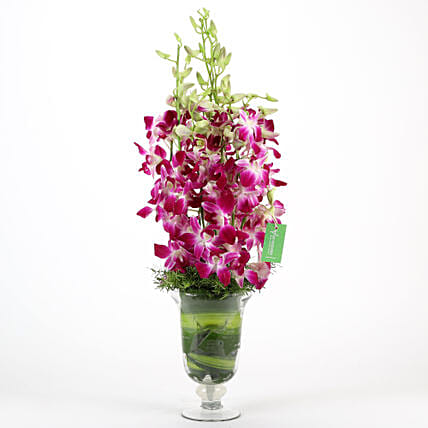 Glass vase arrangement of 10 purple orchids flowers gifts womens day women day woman day women's day:House Warming Flowers