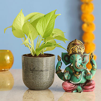 Raj Ganesha Idol Money Plant Combo:Good Luck Plants for Diwali