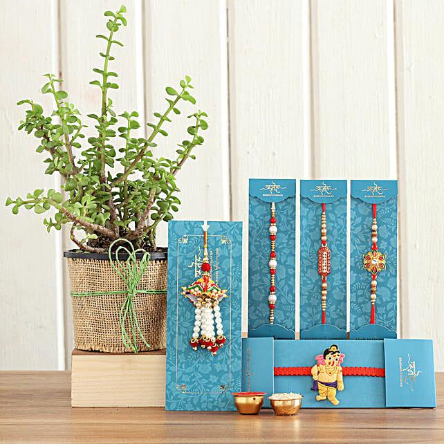 online Raksha Bandhan Combo Of Jade Plant