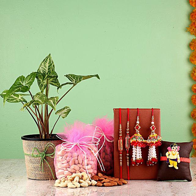 online Raksha Bandhan Combo Of Syngonium Plant