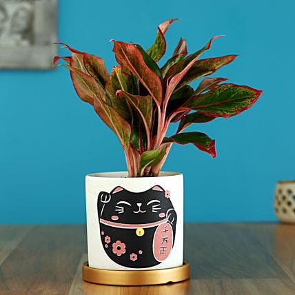 Red Aglaonema Plant In Golden Plate Cat Print Pot:Ceramic Planters