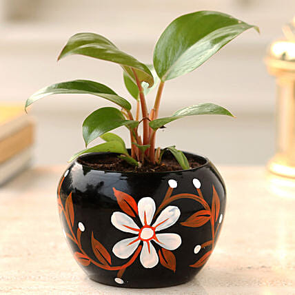 Buy Red Philodendron Plant  Pot