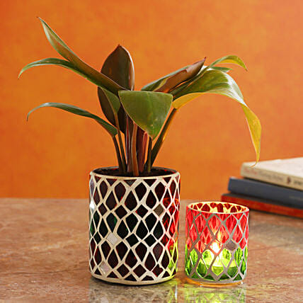 Red Philodendron Plant In Mosaic Mirror Pot And Votive