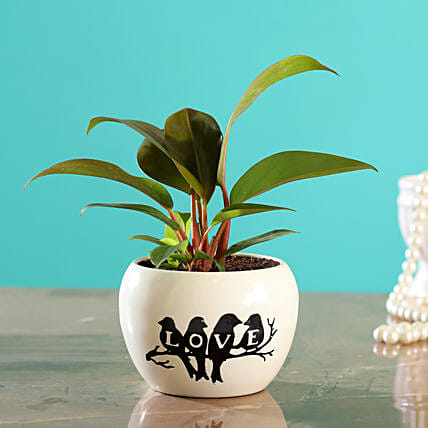 Red Philodendron Plant In White Printed Love Pot
