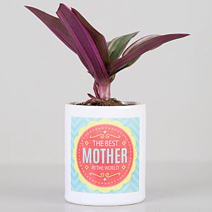 roheo plant with printed coffee mug for mom