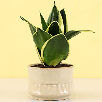 attractive indoor plants for home décor