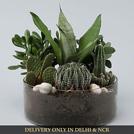 air purifying plant in vase online:Buy Dish Gardens