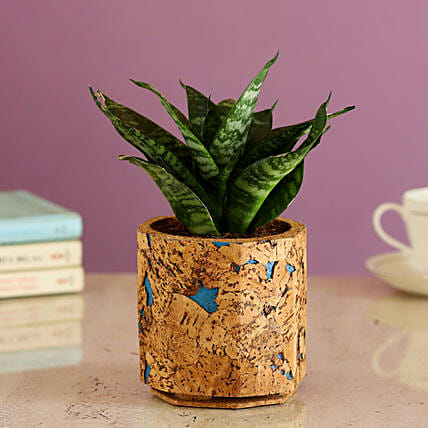 Airpurifying Plant In Cork Pot Online