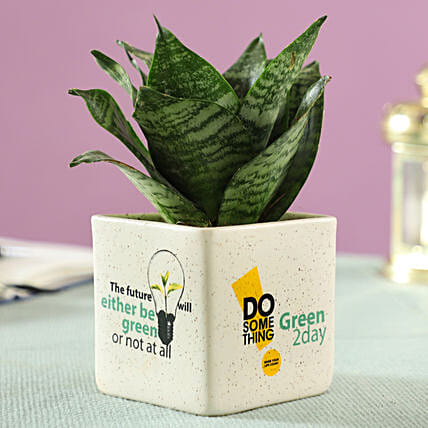online airpurifying in beige ceramic pot