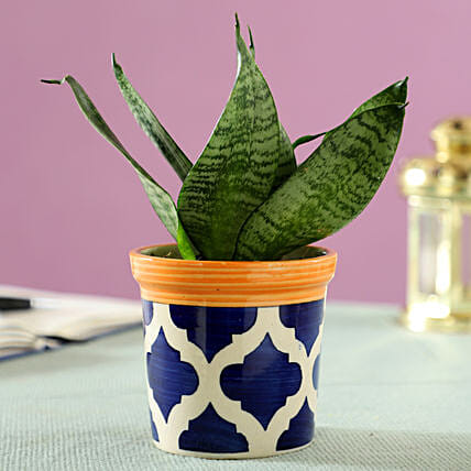 air purifying plant in ceramic pot online