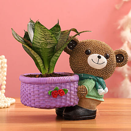 Sansevieria Plant In Brown Bear Basket Pot