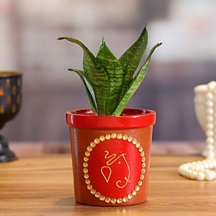 Sansevieria Plant in Red Terracotta Pot