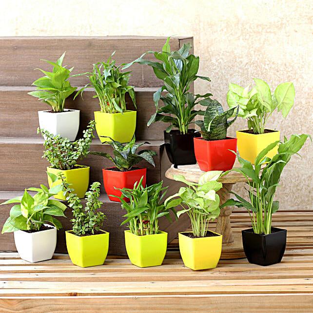 Set Of 12 Beautiful Green Plants