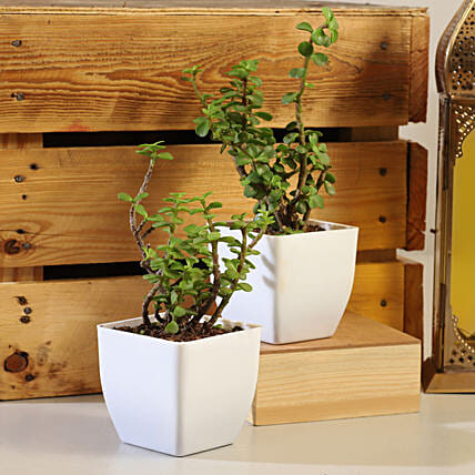 Set Of 2  Plants Online
