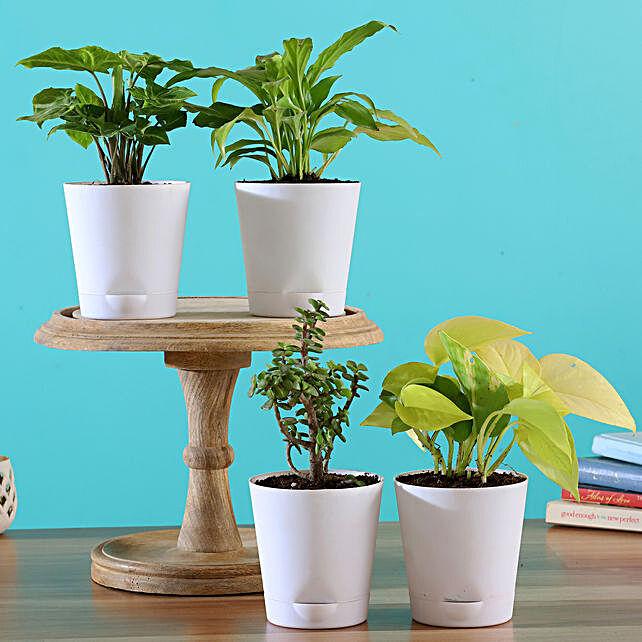 Plants In White Pots Online