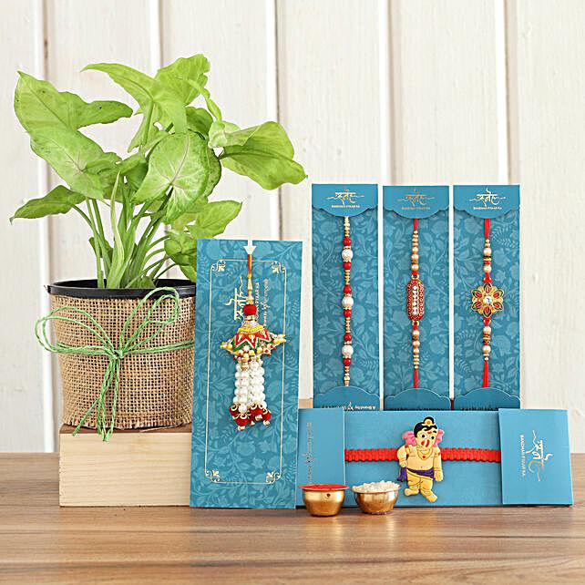 Set Of 5 Rakhis Syngonium Plant