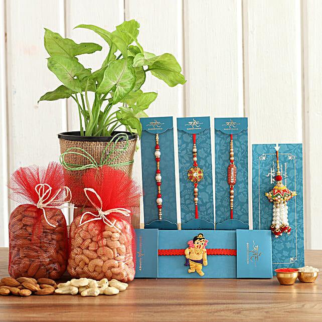 Set Of 5 Rakhis With Syngonium Plant Nuts