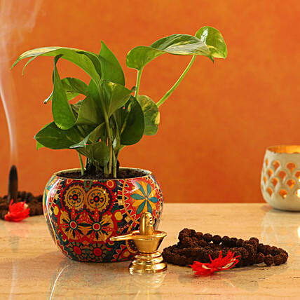 Shivling Money Plant:Shivratri Gifts