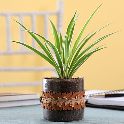 Plant in Glass Pot Online