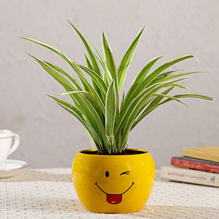 Spider Plant In Emoji Printed Pot