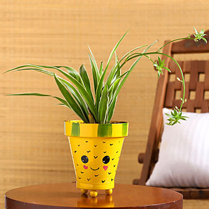 Spider Plant In Yellow Smiley Pot With Plate