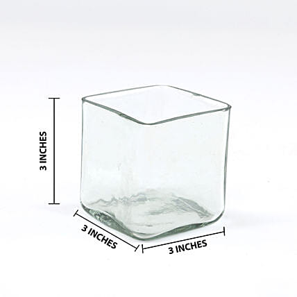 Online Square Glass Vase:Glass Planters