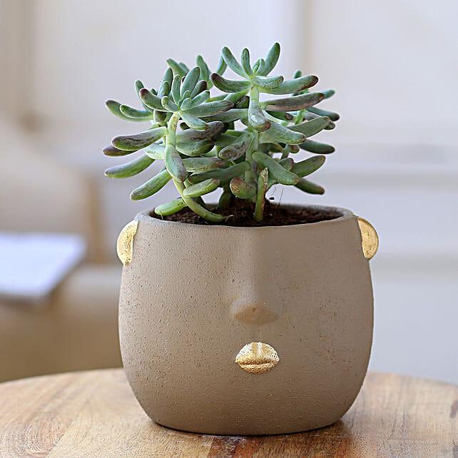 Stonecrop Plant In Grey Face Ceramic Pot