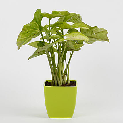 office plant online