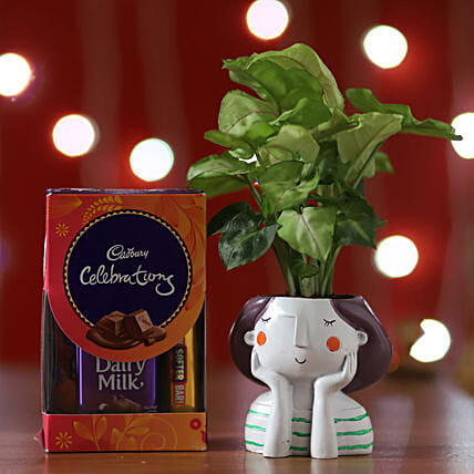 Online Syngonium Plant And Chocolates