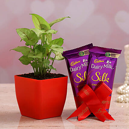 Syngonium Plant Dairy Milk Silk Combo Hand Delivery