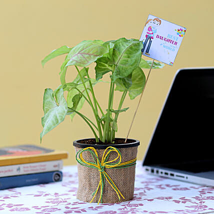 Online Plant For Daughter's Day