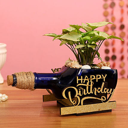 Syngonium Plant In Birthday Antiquity Bottle Planter:Air Purifying Plants